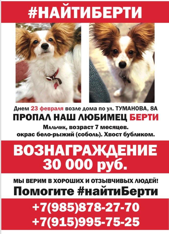 За поиск Берти ярославцам обещают тридцать тысяч