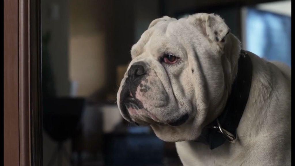 Владимир Слепцов предложил создать больше площадок для выгула собак