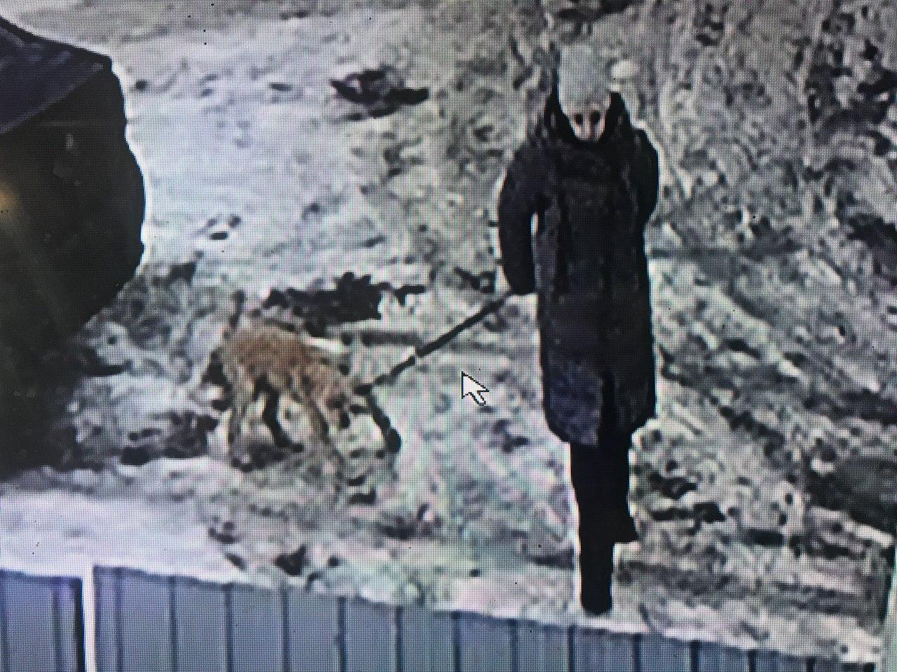 В Ярославле ищут женщину, которая подбросила щенка к чужому дому и сбежала