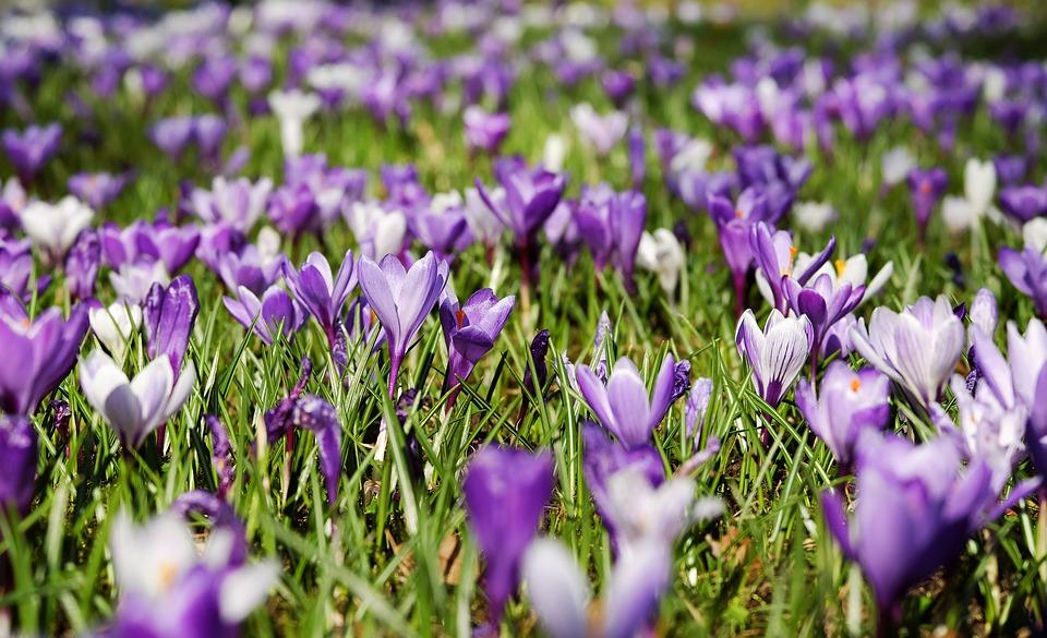 Синоптики рассказали, когда в Ярославль придет настоящая весна