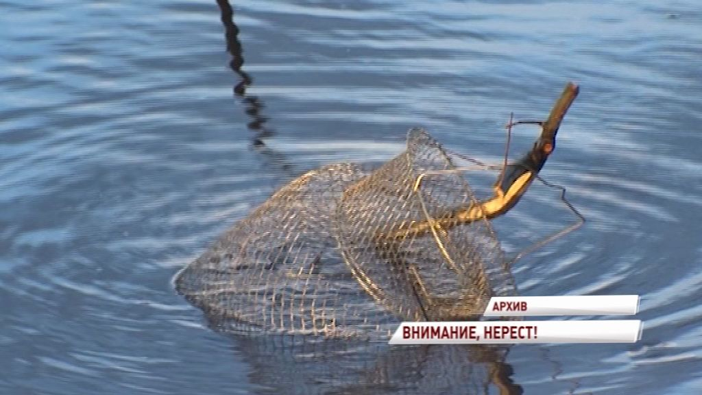 Внимание, нерест: где нельзя будет ловить рыбу ближайшие пару месяцев