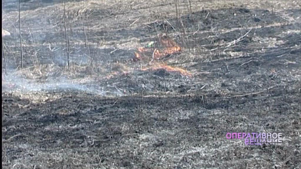 За утро понедельника в Ярославле зафиксировали шесть случаев поджога травы