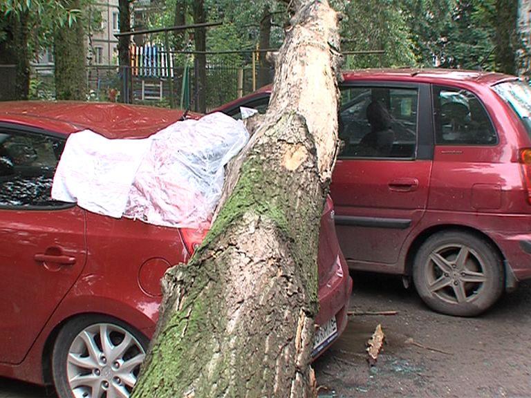 Погода потенциально опасна: в Ярославской области объявлен желтый уровень опасности