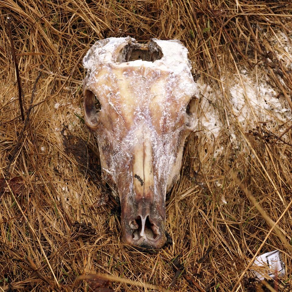 В Ярославле рядом с детским садом нашли черепа животных