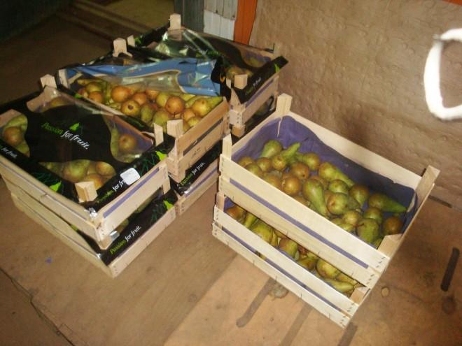В Ярославской области раздавили почти сто килограммов польских груш
