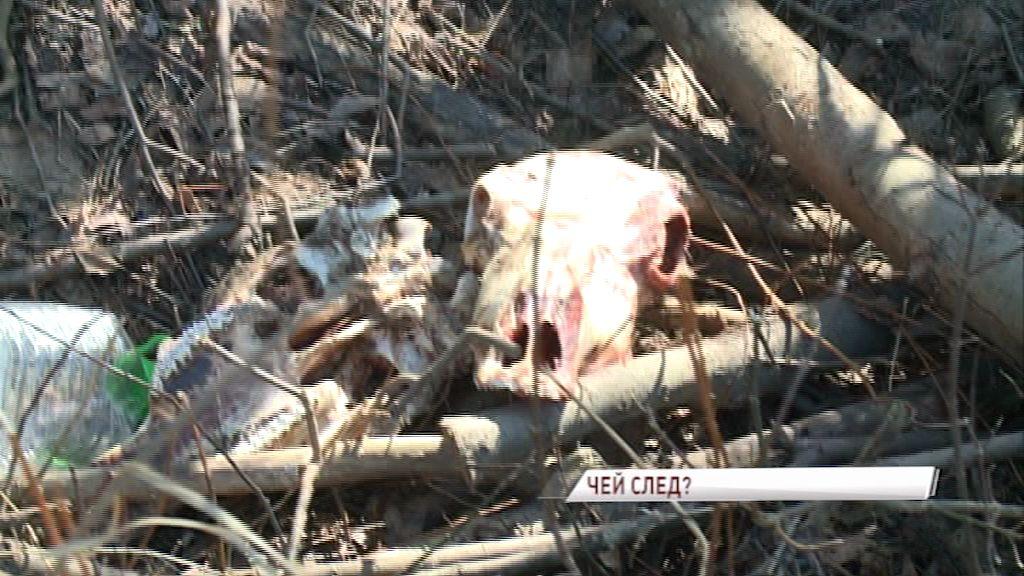 С улицы в Заволжском районе Ярославля убрали черепа коров