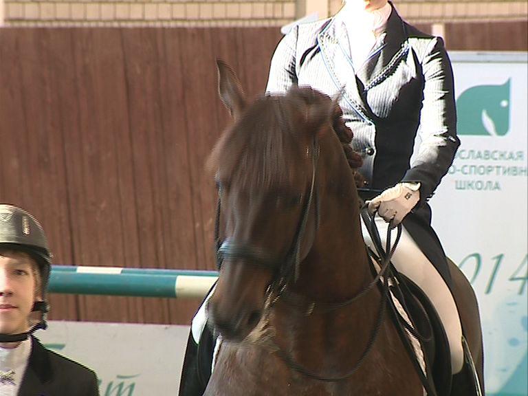 Мэр Ярославля попросил разобраться с нелегальным катанием на лошадях