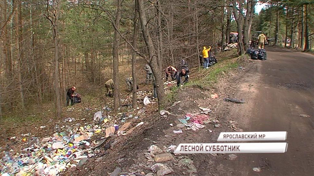 Волонтеры вышли на «лесной субботник» и убрали за недобросовестными отдыхающими мусор