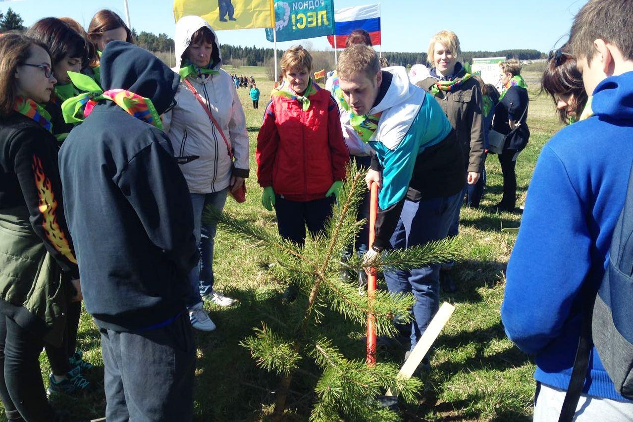 Более тысячи жителей Даниловского района высадили новый сосновый бор