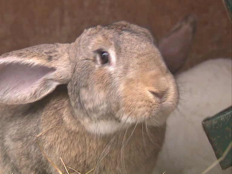 В Ярославской области появится кролиководческий кооператив