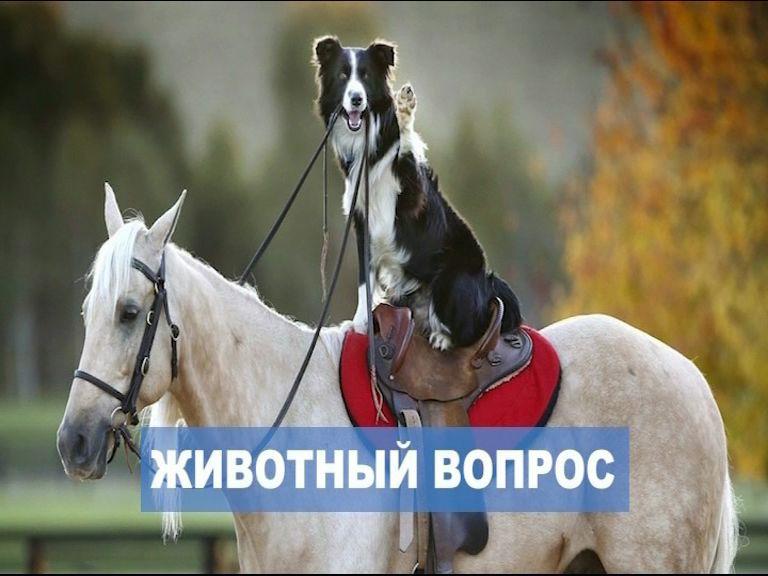 Отдельные площадки для прогулок на лошадях и для выгула собак: как мэрия организует работу с животными в городе