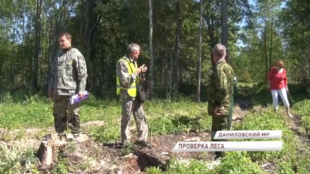 В регионе проверили арендаторов лесных участков