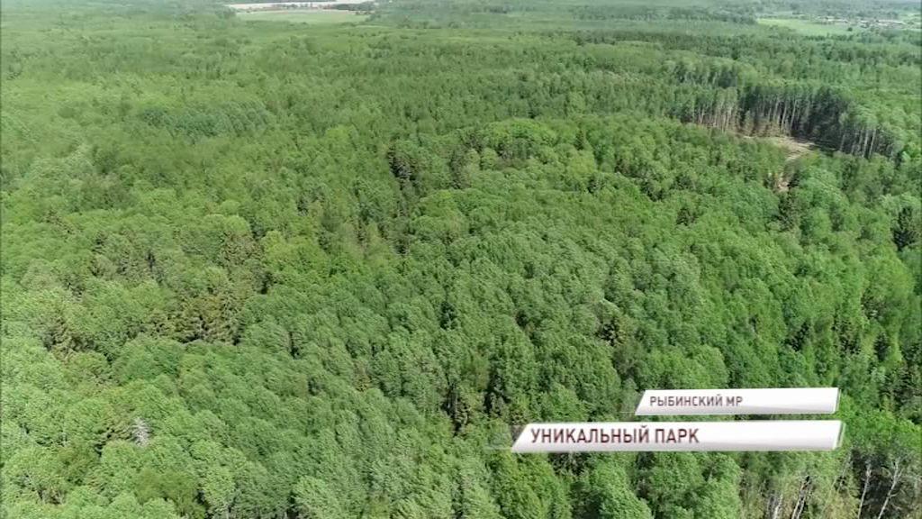 Новый парк под Рыбинском станет центром экологического туризма