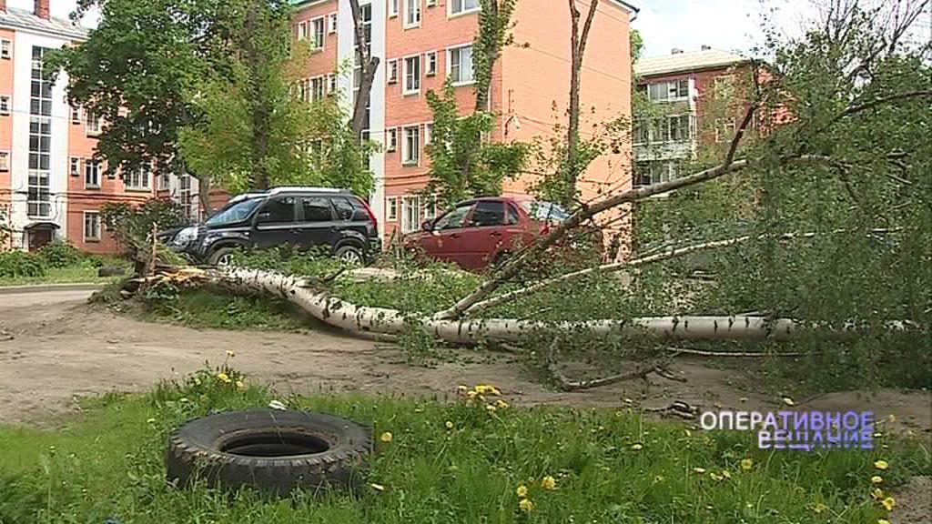 Бушующий в Ярославской области циклон оставил без электричества некоторых жителей региона