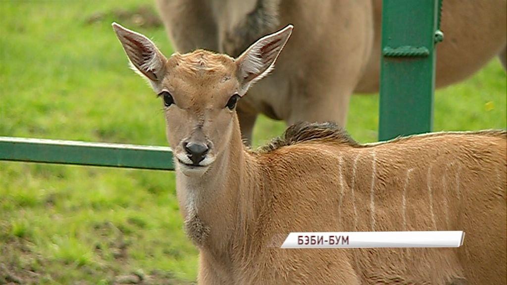 В Ярославском зоопарке сразу у нескольких семей животных родились детеныши