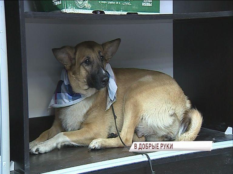 В одном из ярославских ТЦ раздали в добрые руки животных из приюта