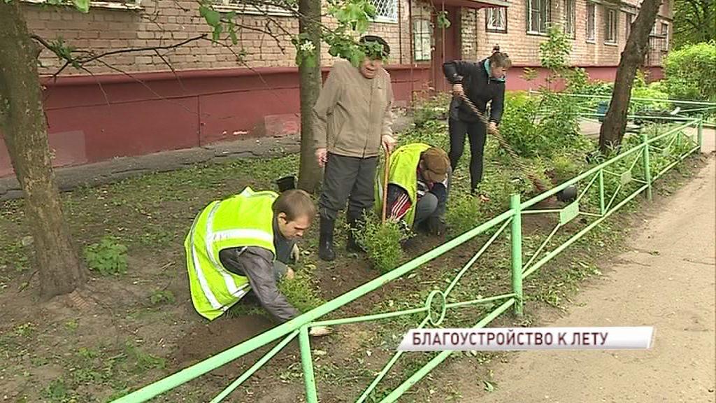 В палисадниках ярославских дворов появились новые растения