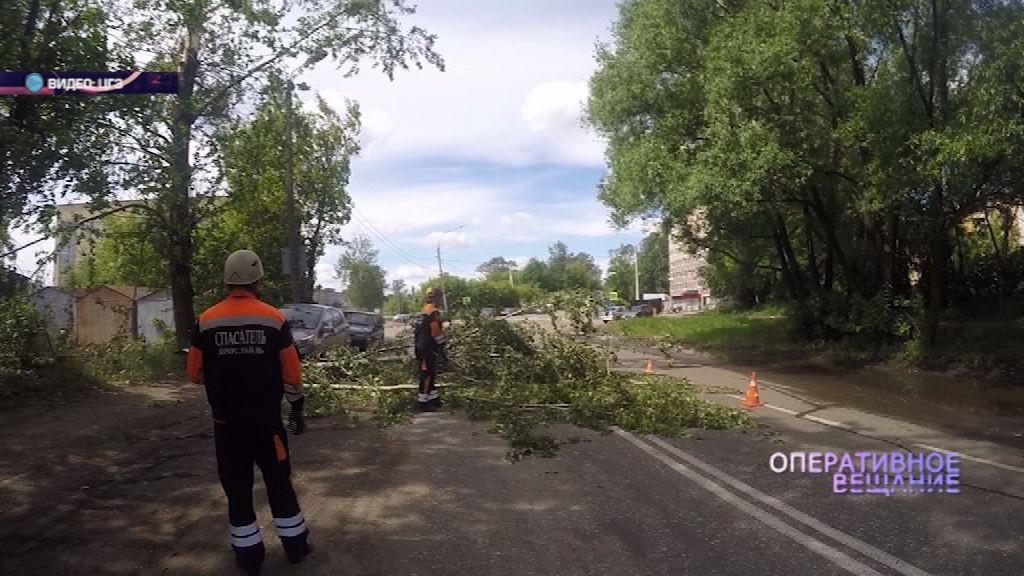 В Ярославле огромная ветка упала прямо перед автомобилем