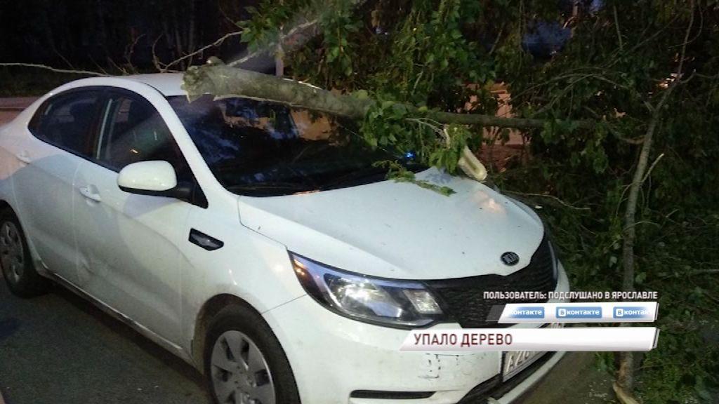 Автомобиль экс-капитана «Локо» пострадал от веток