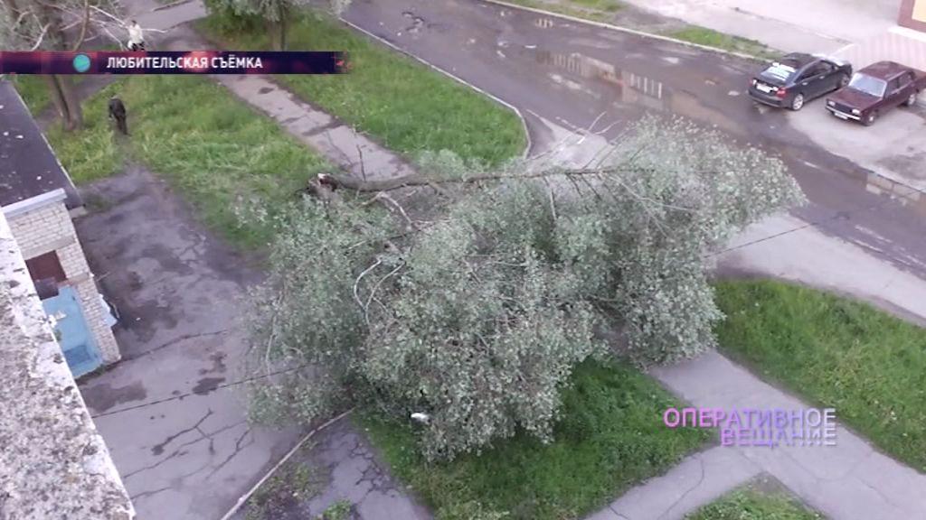 Ветер снова валит деревья в Ярославле