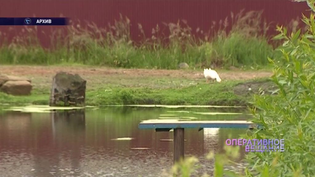 В Угличском районе утонул подросток