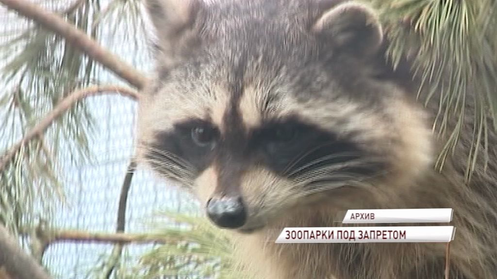 Госдума предлагает запретить контактные зоопарки