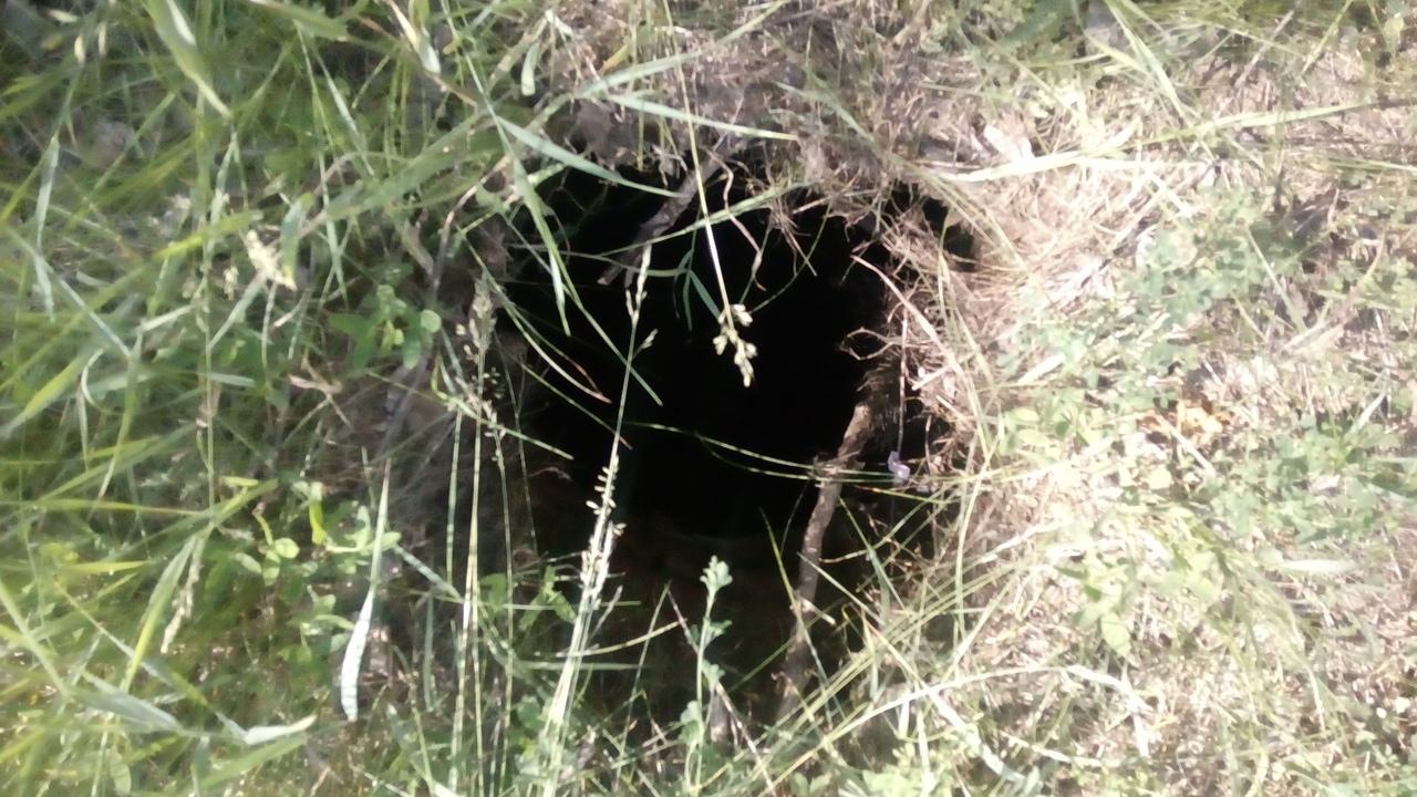 Подземная ловушка: в Заволжском районе в открытый люк провалилась собака