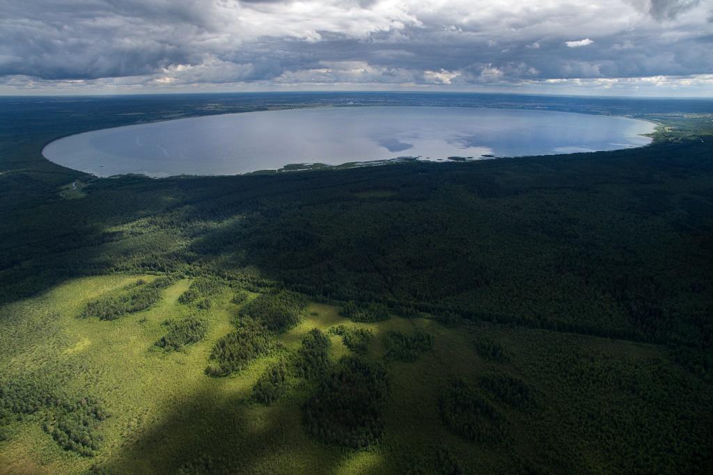 В парке «Плещеево озеро» посадили более 60 тысяч саженцев ели