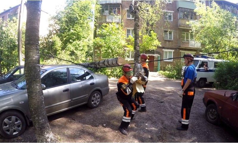 В Ярославле упавшая береза повредила два припаркованных автомобиля