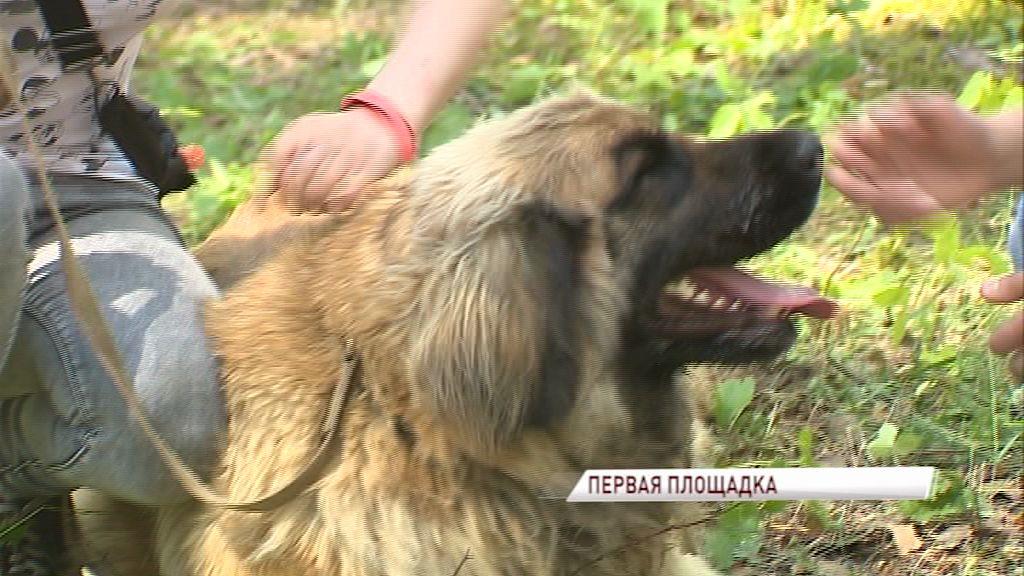 В Ярославле начали устанавливать первую площадку для выгула собак