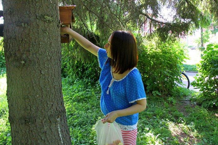 Белки в Волжском парке Рыбинска стали чаще выходить к отдыхающим