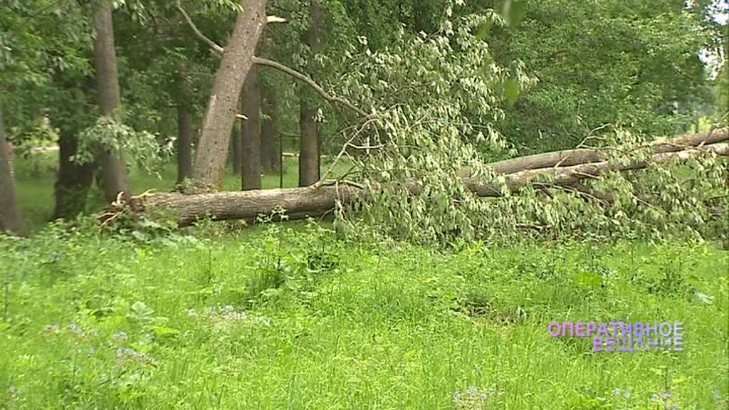 Поваленные деревья, летающие ведра, обрыв ЛЭП: в Ярославском районе бушевала стихия