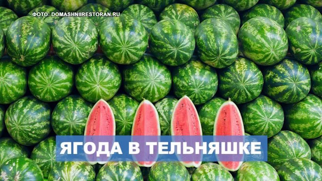 Сезон или не сезон: разбираемся с готовностью арбузов на ярославском рынке