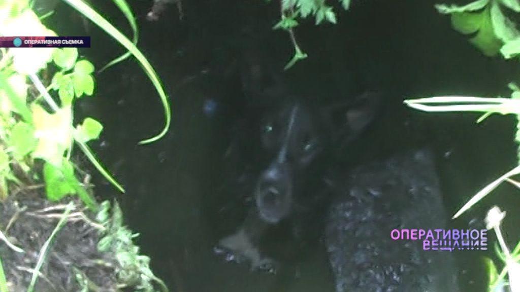 В Ярославле дворняга провалилась в колодец: собаку вытащили спасатели