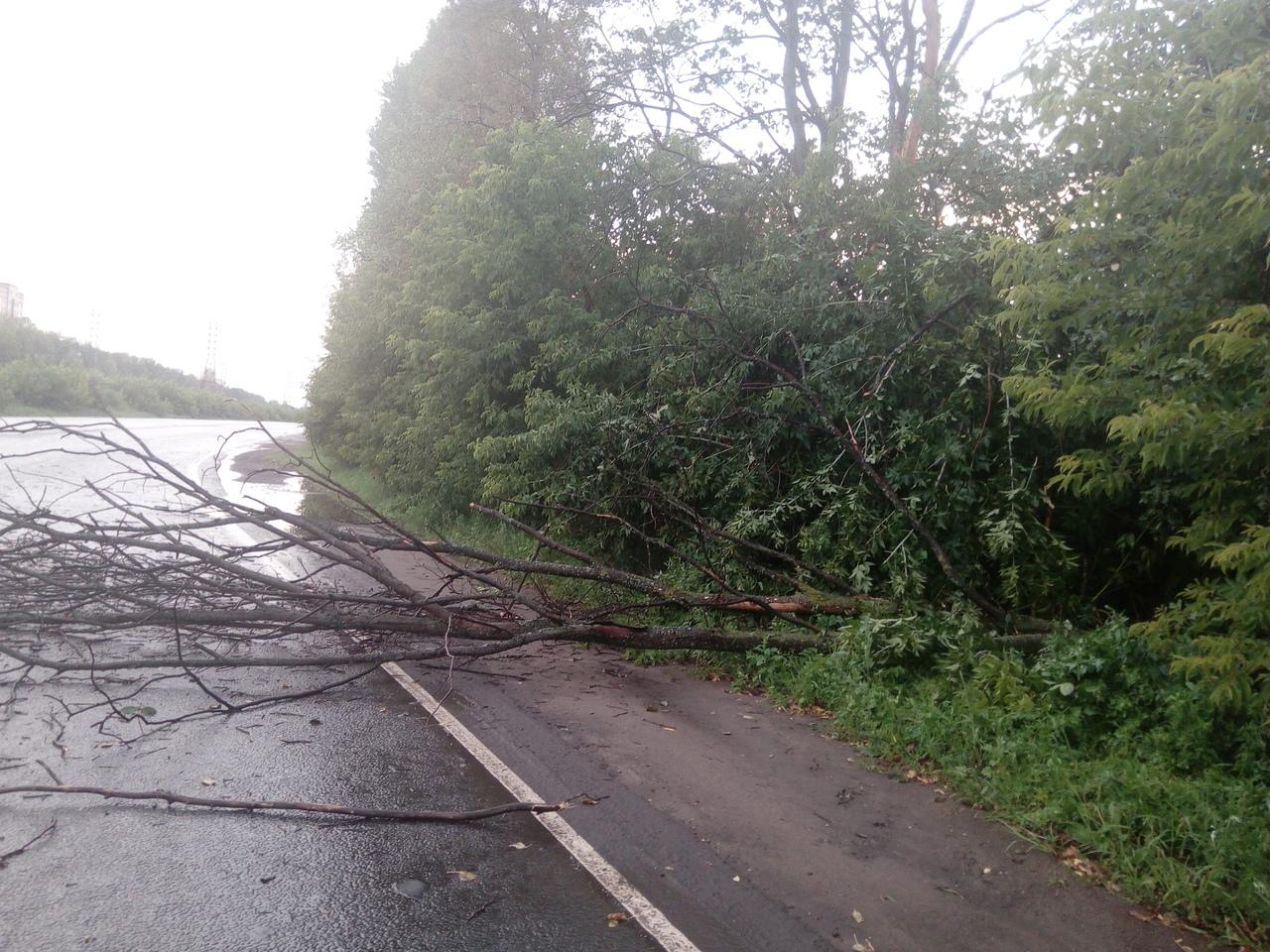 ФОТО: Сильный ветер опрокинул деревья в разных местах Ярославля
