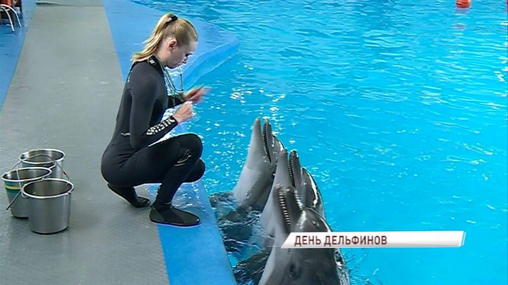 Во всем мире отмечают День китов и дельфинов