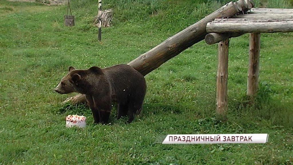 Медведей из ярославского зоопарка угостили вкусным тортом в честь дня рождения