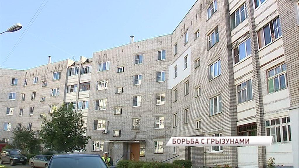 Грызуны атакуют: управдом Заволжского района активно борется с крысами