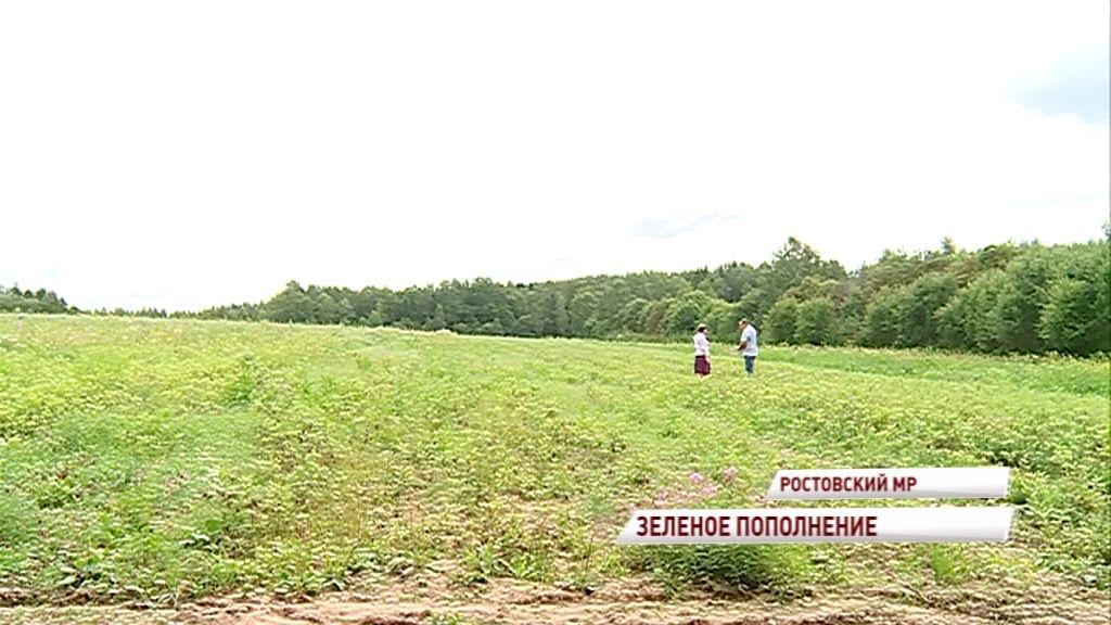 7,5 миллионов деревьев высадят в этом году в Ярославской области