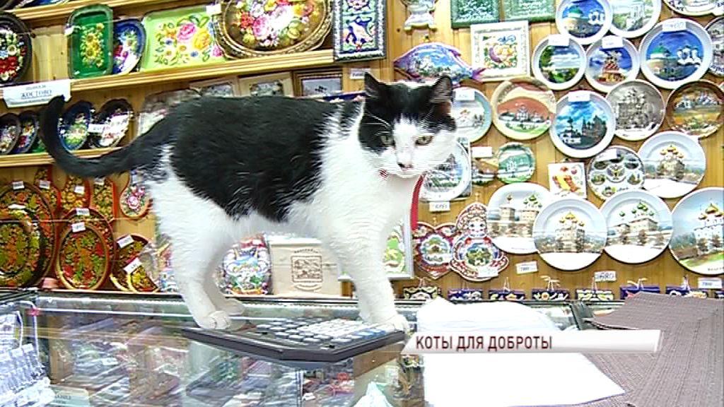 Праздник усатых-полосатых: расскажем о медийных кошках