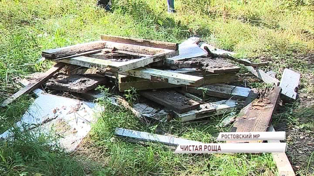 «Экодесант» спас от мусора березовую рощу в поселке Петровское