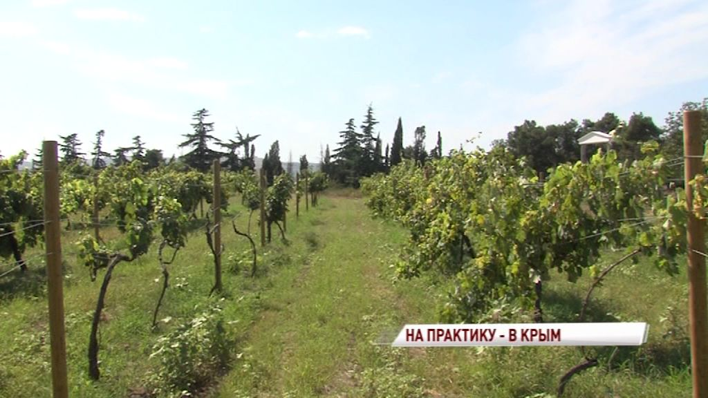 Ярославские студенты будут проходить практику на одном из ведущих крымских агропредприятий