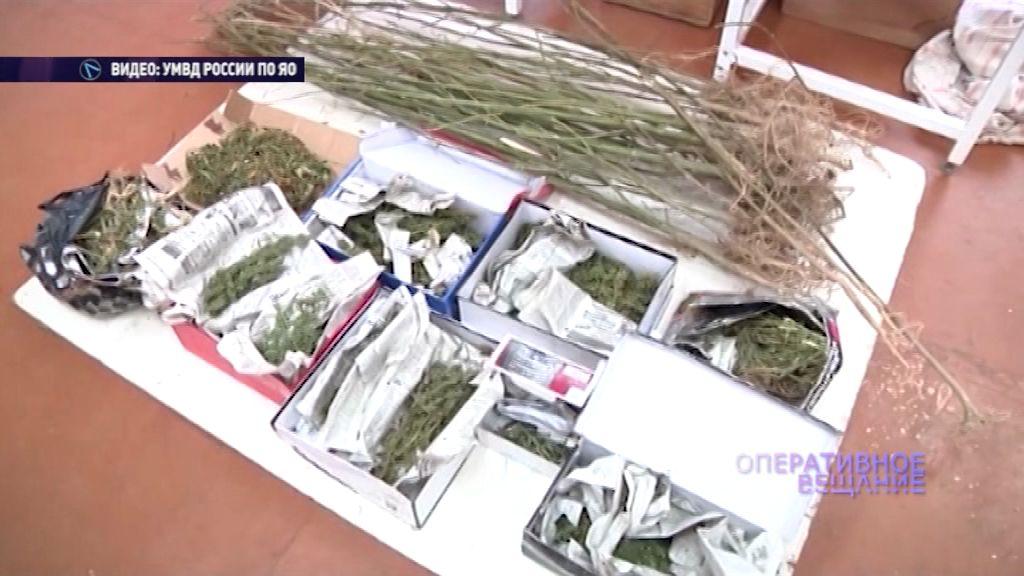 Жителя Некрасовского района поймали с огромным мешком конопли