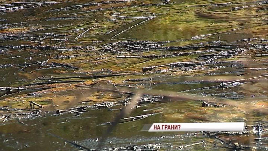 На окраине Ярославля обнаружили огромный «нефтяной» пруд