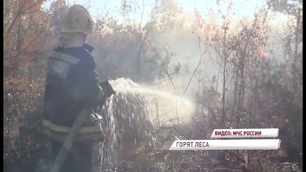 В лесу под Переславлем-Залесским потушили два пожара