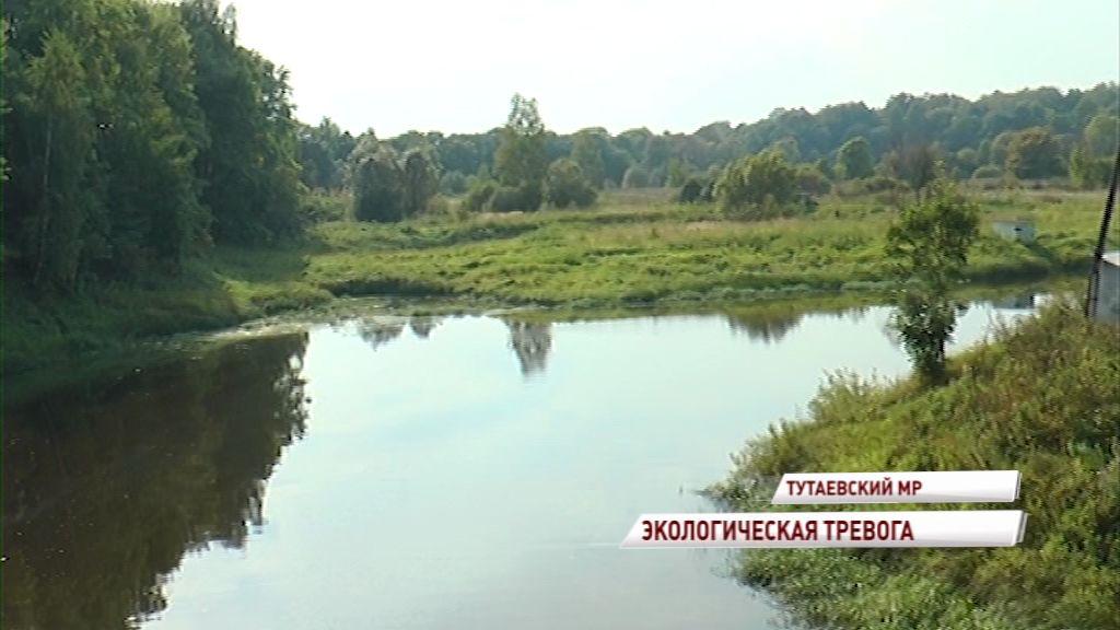 Эксперты проверили информацию о загрязнении Волги в районе поселка Константиновский