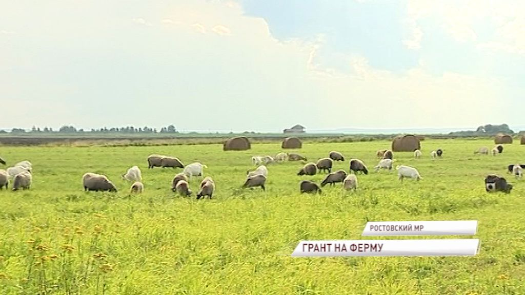 Из семейного бизнеса в преуспевающую ферму: как такое возможно