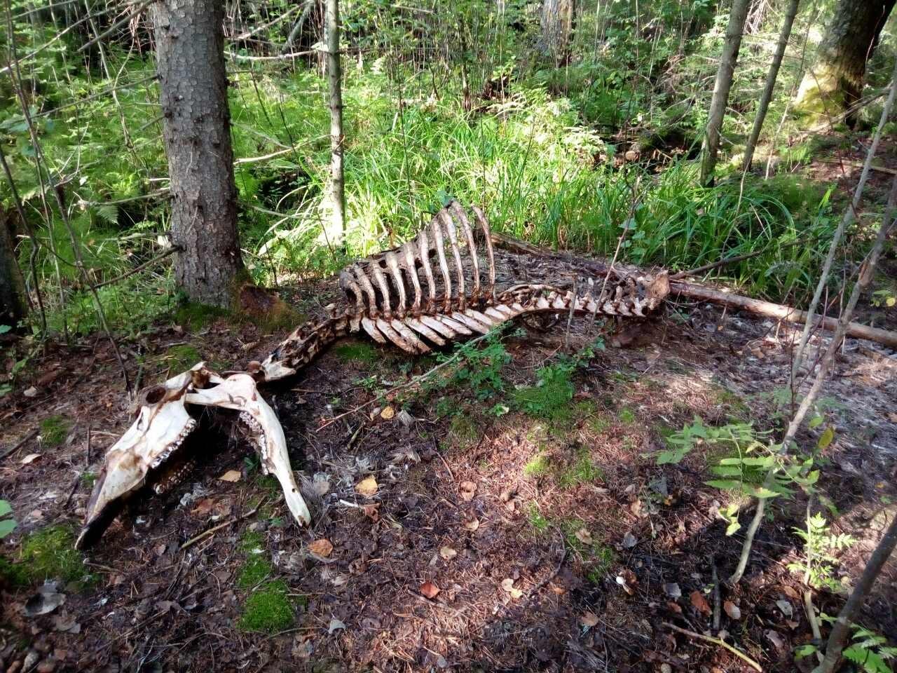 Увидели кости и побросали корзины: в Даниловском районе грибников напугала страшная находка