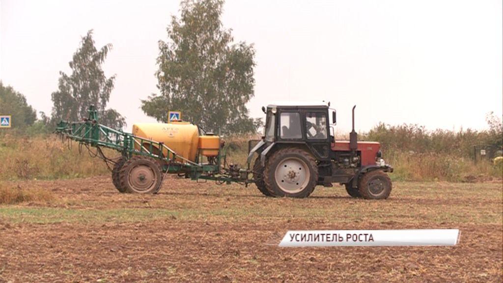 В области сажают озимые с использованием инновационных удобрений: как это повлияет на урожай