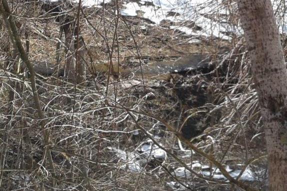 Птицефабрика заплатит около двух миллионов рублей на загрязнение реки
